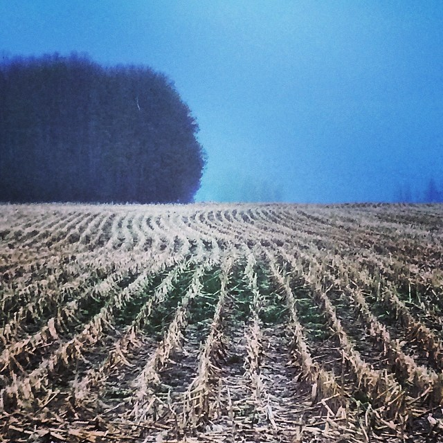 """Oh #canada you had me at """"eh"""" driving to my mums with the rain pouring and that perfect fog hanging in the distance just as twilight hits. Ugh. So in love. My favorite road #borntoroam #homesweethome #ontario #field #lakeontario #rain #chiascuro #love #iprolens 👌❤️"""