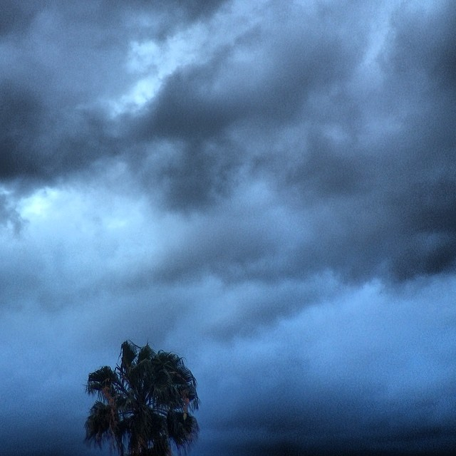 The calm before the (rest) of the storm #cloudporn #losangeles #palm #tree yay #rain #rooftoplove