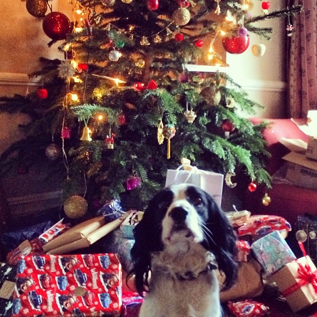 Happy Holidays. If only Scarper the family dog was my prezzie to take home. #inlove #londonchristmas #springerspaniel #dogs #thebest