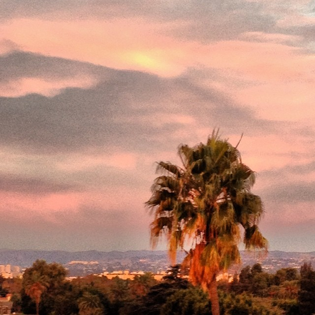 See you again in one month #losangeles #rooftop #love favorite #palmtree #sunset