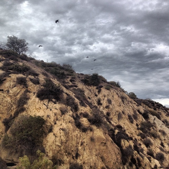 Flying high through #griffithpark #moody #clouds
