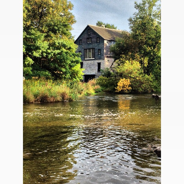 Hundreds of #salmon are lined up gathering strength to jump upstream over a twelve foot waterfall to spawn. Only a few make it. Poor buggers. My favorite #mill in town. Wish I could buy it #ganaraskariver #ontario #love #sunday #funday