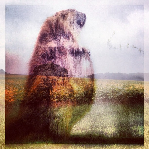 Oh Canada… Home of gorgeous fields, maple syrup, hockey, so much other awesomeness… And yep… beavers. #homesweethome #canadaeh #ontario #dxp #beaver #fields #love