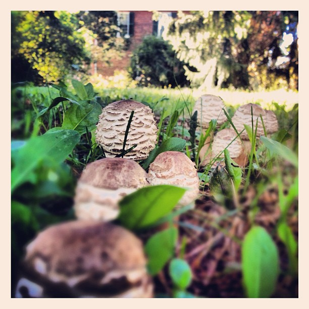 #faerie #toadstools and my mums #beautiful old #victorian #house sad to leave today :(  (Taken with  Instagram )
