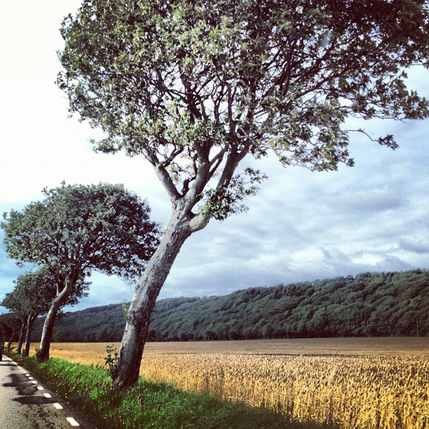 #sweden driving through the countryside #brunnby  (Taken with  Instagram )