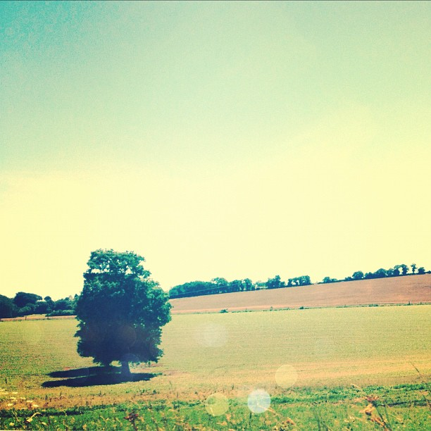 Stunning #field #bretagne #france  (Taken with  Instagram )