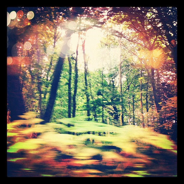 Off for another day of scouting at #vieillescharrues @mandmcasting #forest #france #drivebyshot #picofthemorning   (Taken with  Instagram )