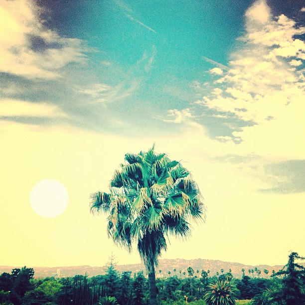 See you in one month oh #palm of mine… #losangeles you surprise me sometimes #rooftop #love  (Taken with  Instagram )