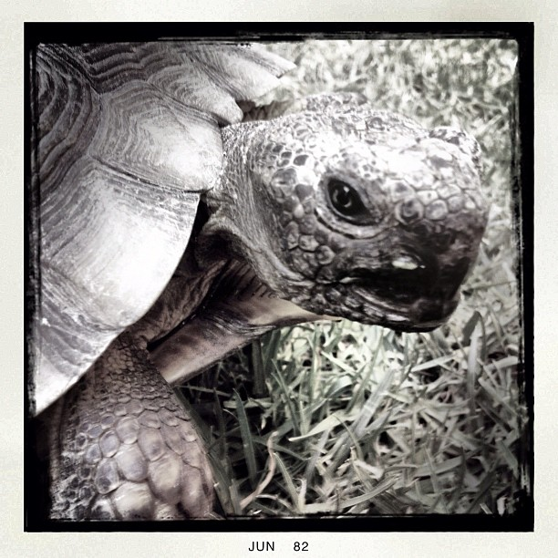 #turtles are amazing  (Taken with  Instagram )