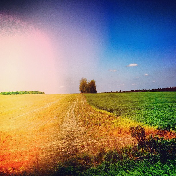 My favorite #ontario #fields missing them today. #oh #canada #hotday #sun #flare  (Taken with  instagram )