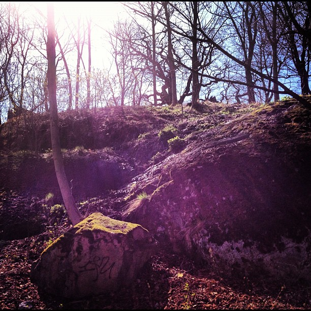 Love #moss  (Taken with  instagram )