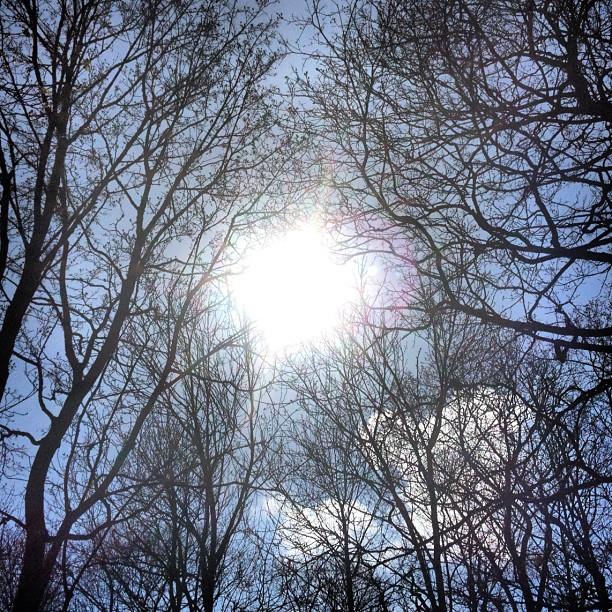 #sun in the #trees #stockholm #university  (Taken with  instagram )