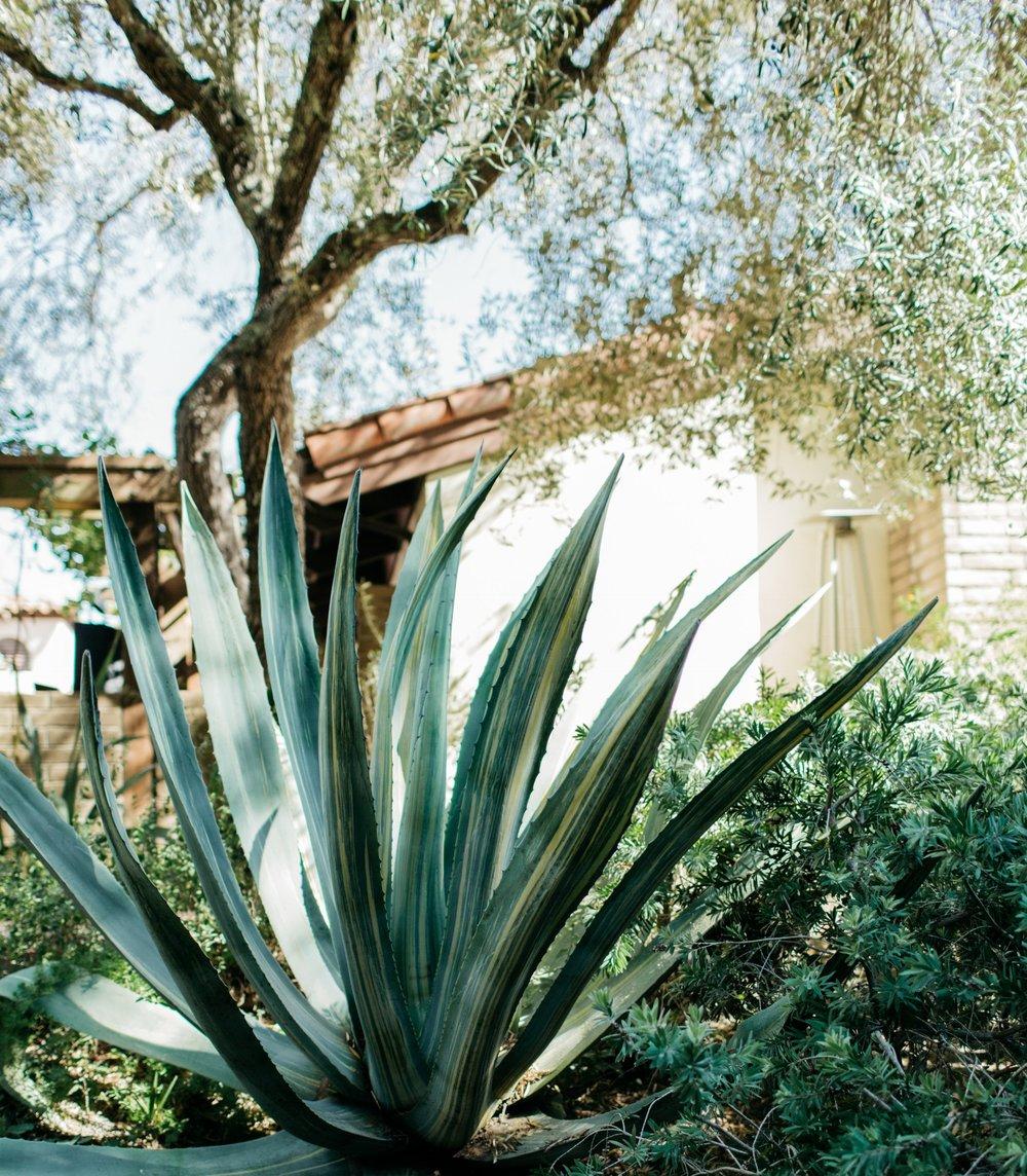 Kennolyn-Santa-Cruz-California-Wedding-Anna-Howard-Studios-0028.jpg