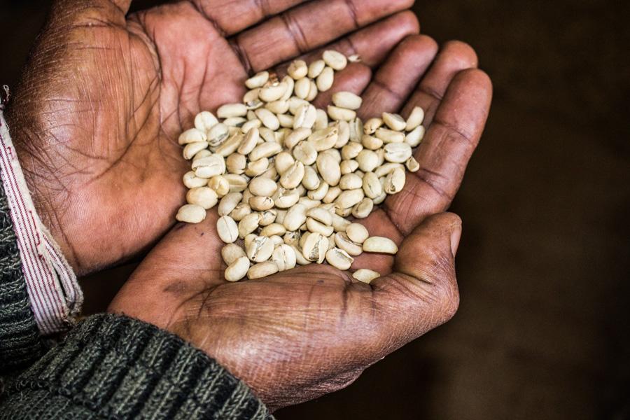 Ethiopia_Coffee_Kochere_Green_Beans