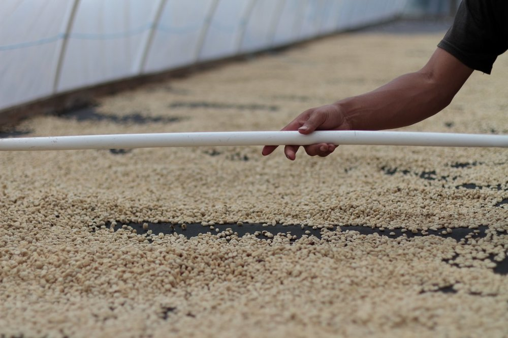Honduras_Origin-Drying-Coffee-Beans.jpg