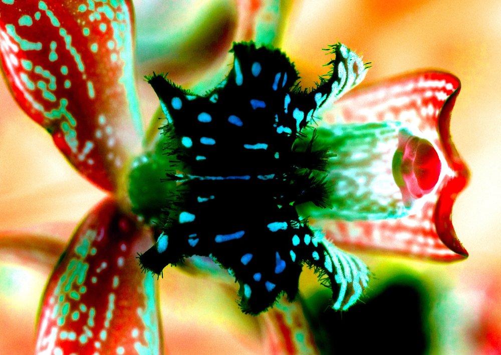 2 X OrchidSeries.jpg