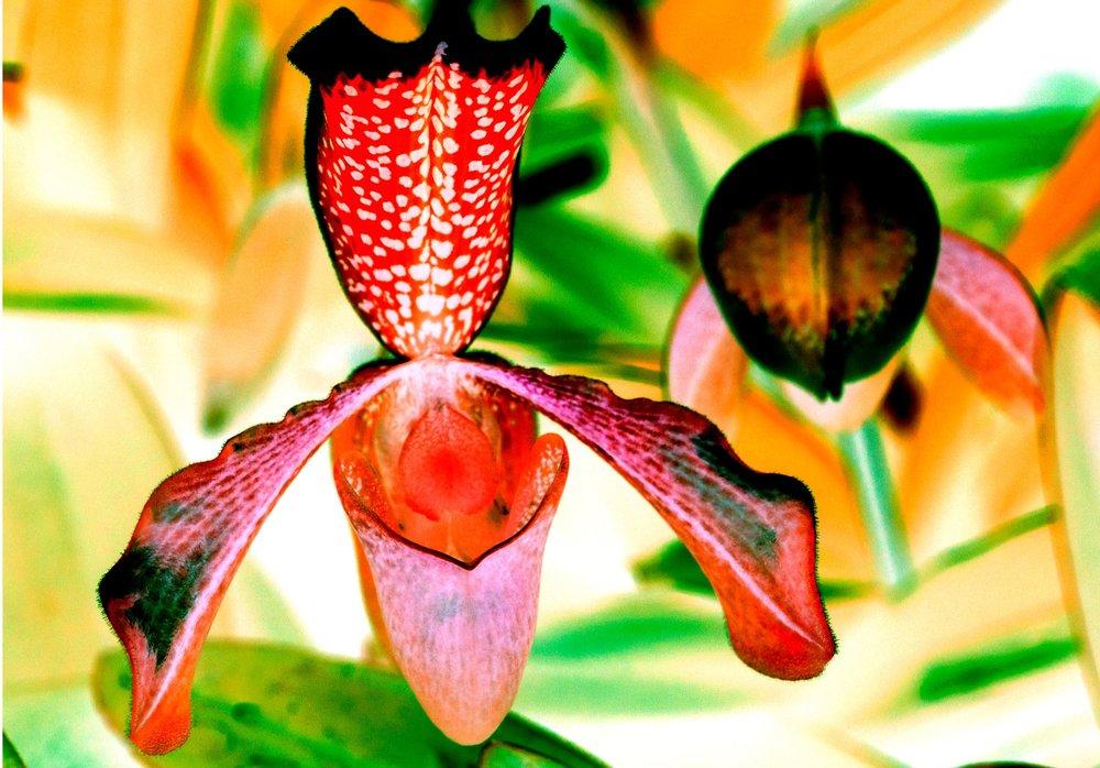 2 X OrchidSeries3.jpg