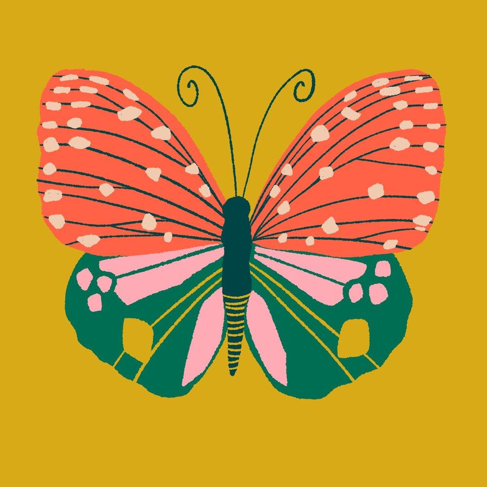 Butterfly_02.jpg