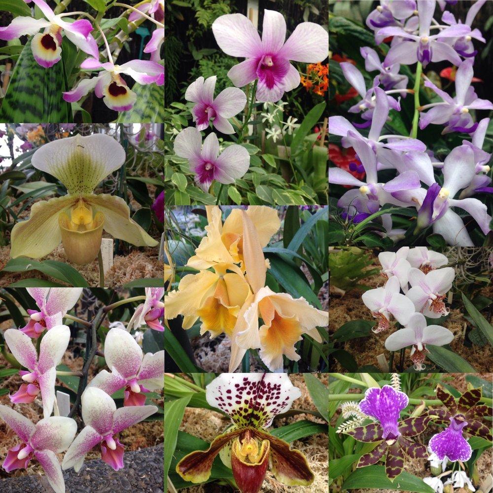 ♥ Orchids ♥