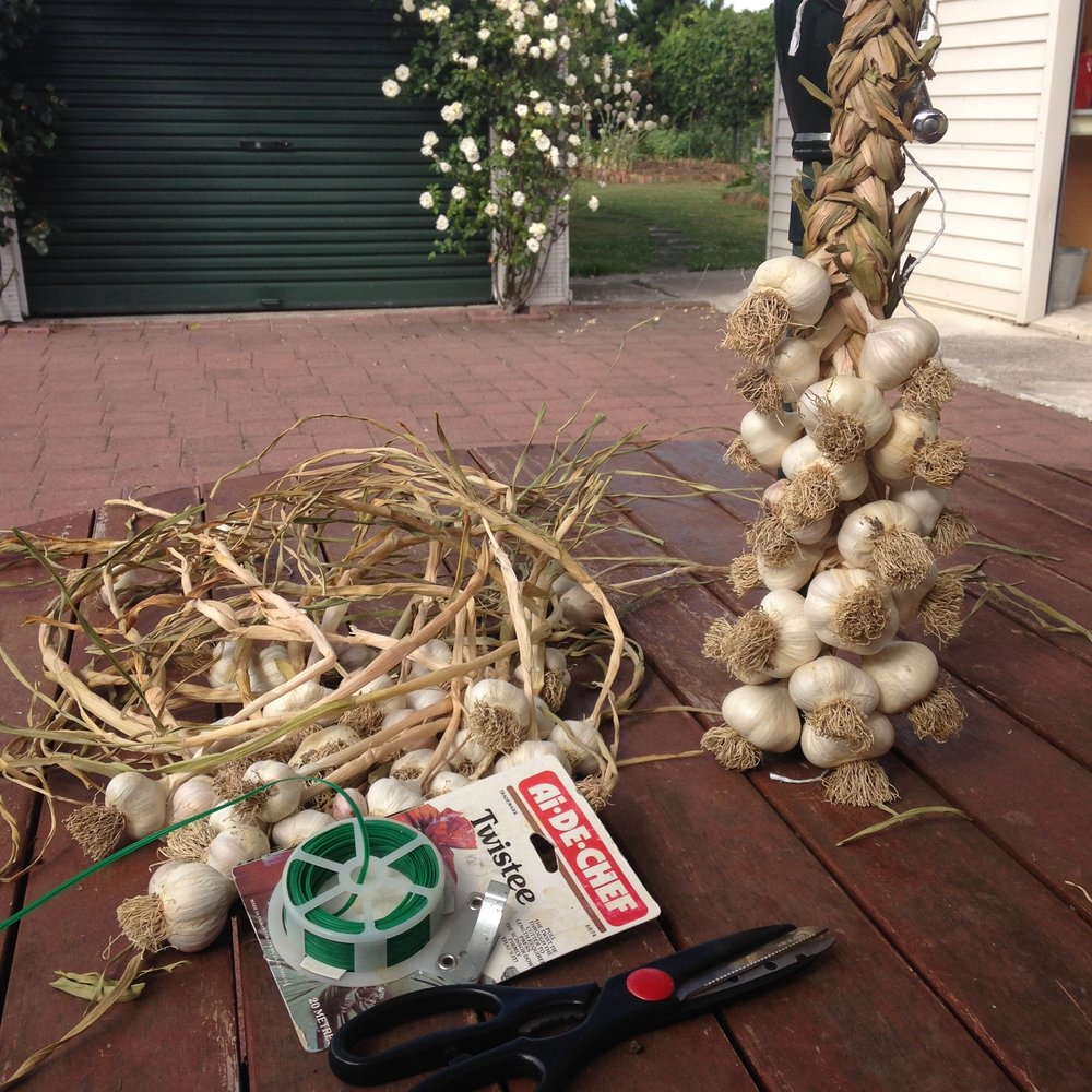 Grown and plaited garlic