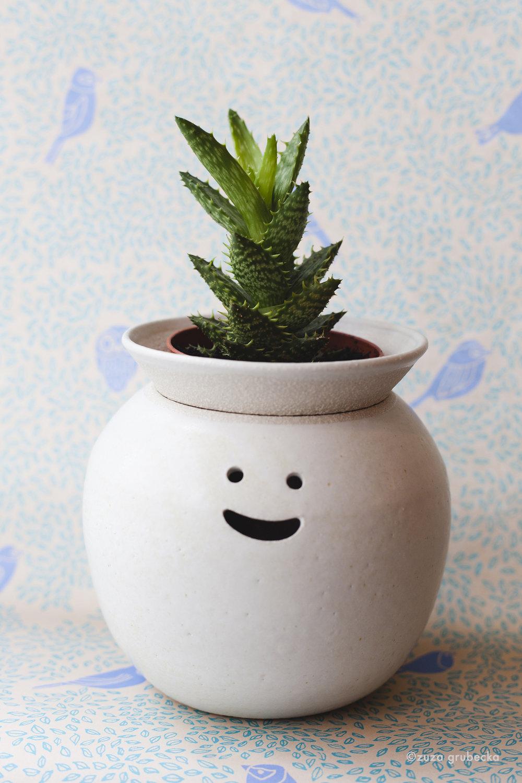 Aloe Succulent  £6  Pot:  Namiko Murakoshi  £66