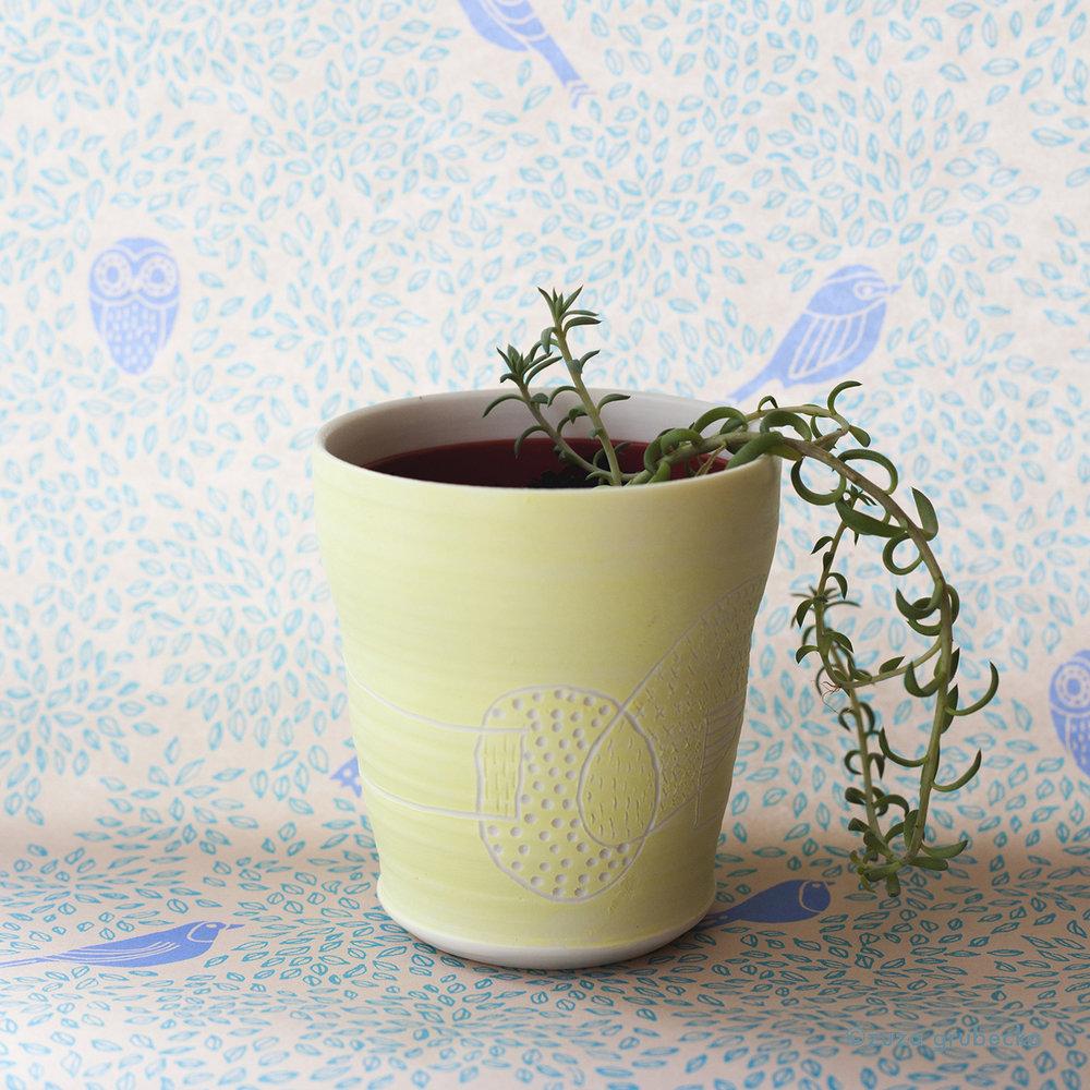 Sedum Succulent  £5  Pot:  Josefina Isaza  £30