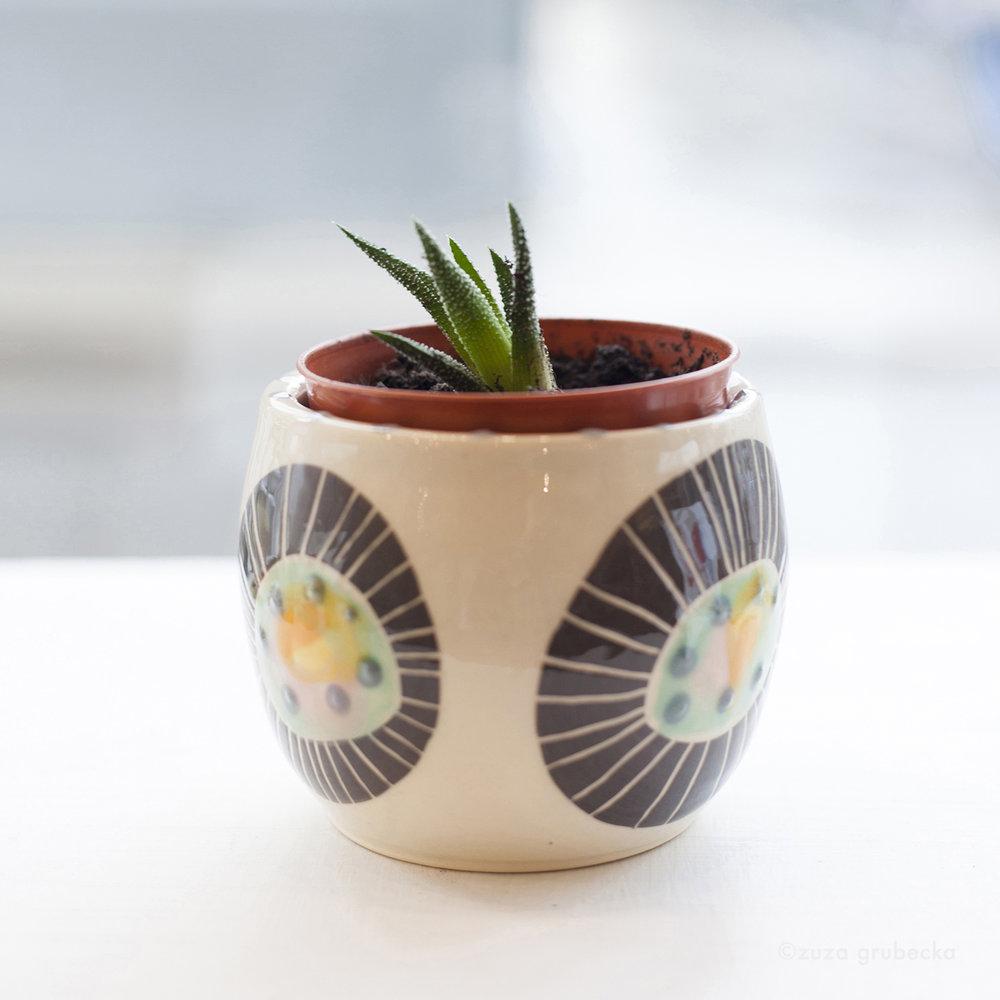 Haworthia Succulent £5 Pot: Ceri White £46