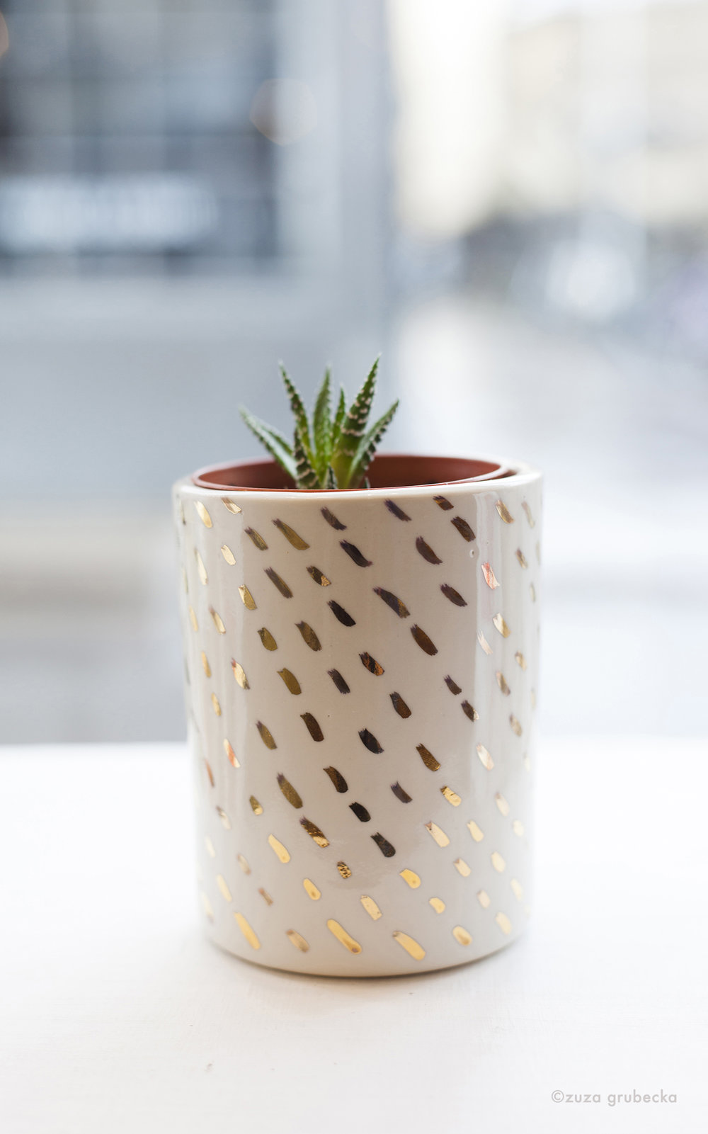 Haworthia Succulent  £5  Pot:  Alice Walton £30