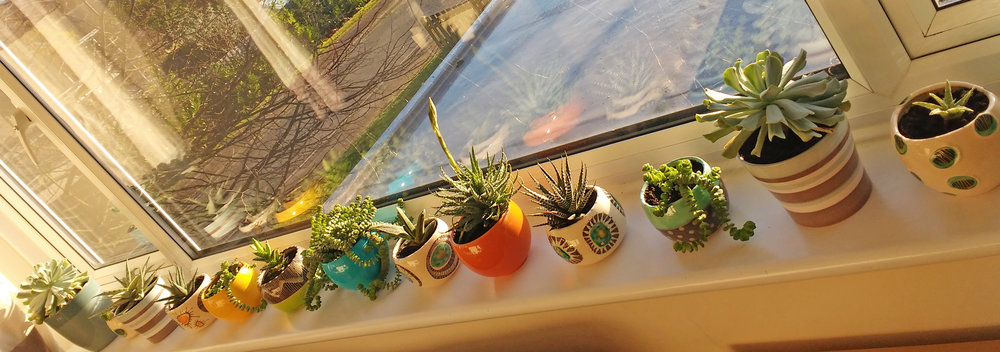 Gonda's ever-growing windowsill garden