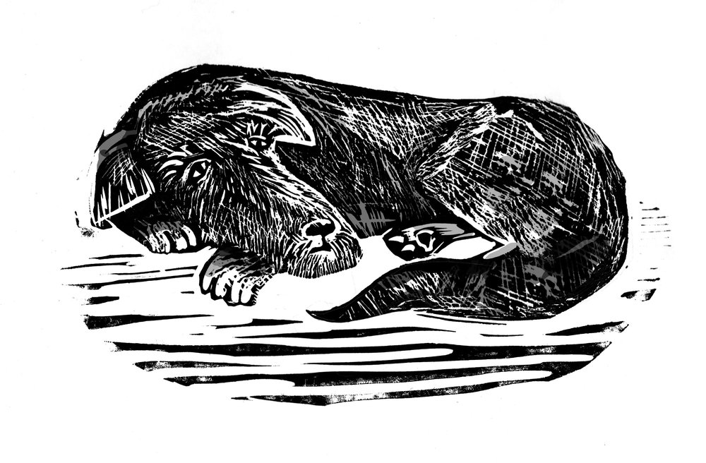 Black Dog  linocut  £70 (unframed)