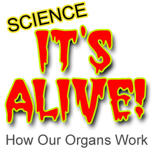 What has yards of guts, Brain on a spine, talking lungs and a rockin' heartbeat? Major organs of the body come to life in It's Alive!