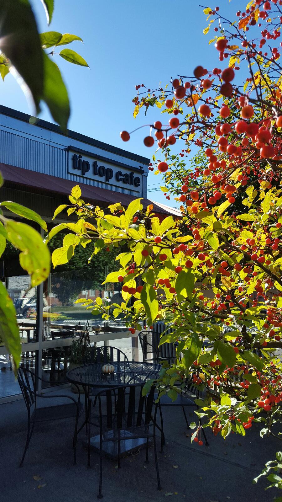 Fall patio 2 2015.jpeg