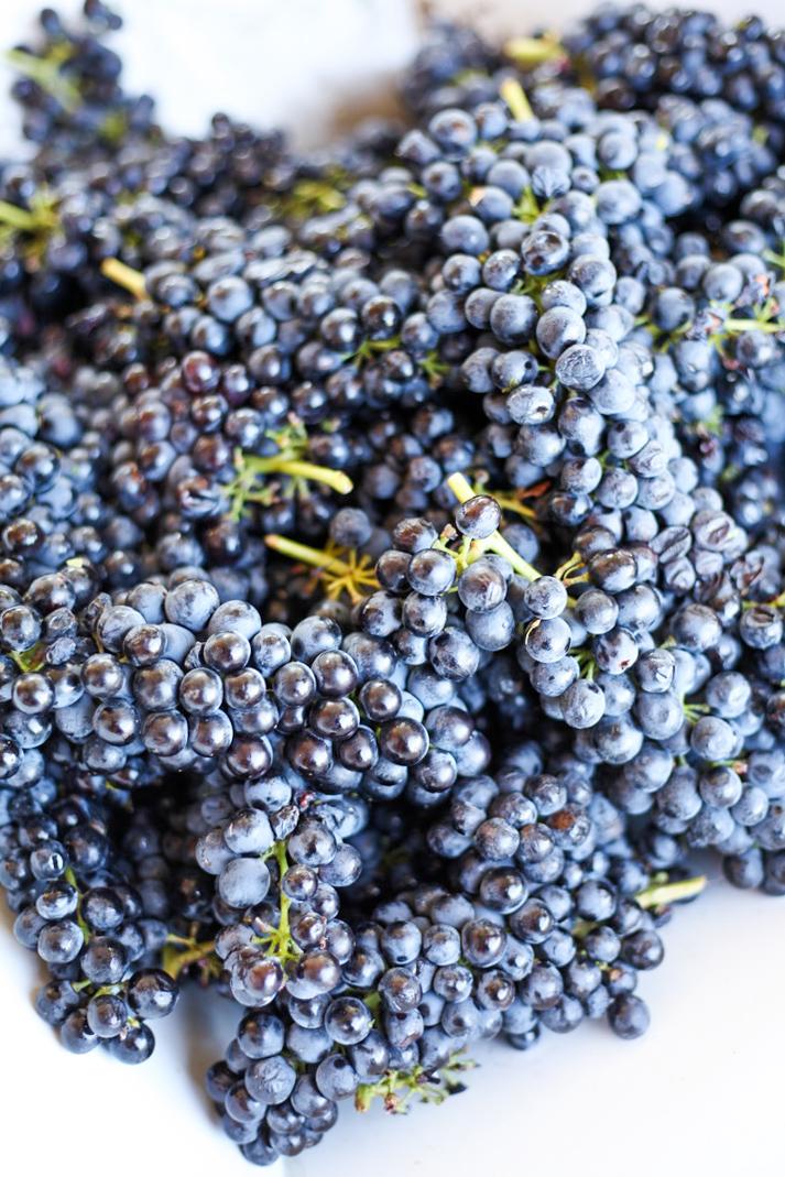 Harvest2019 (1 of 1)-17.jpg