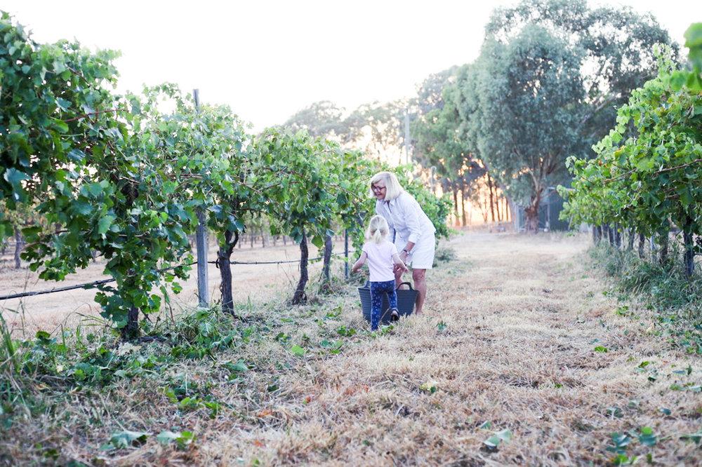 Harvest2019 (1 of 4).jpg