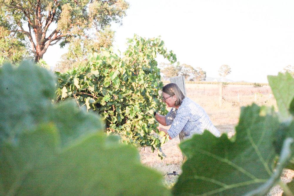 Harvest2019 (1 of 7).jpg