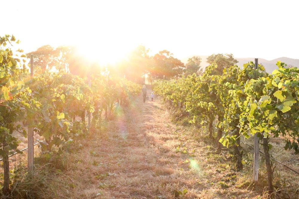 Harvest2019 (3 of 7).jpg