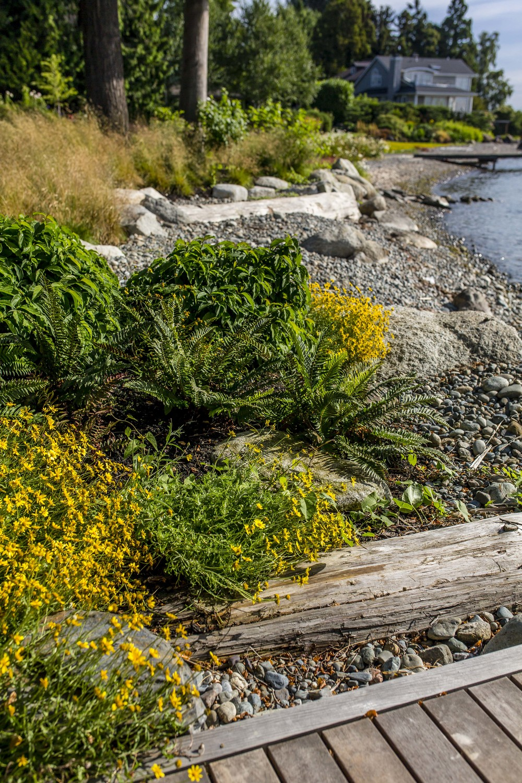 Project Groundwork Madison Park Shoreline Restoration