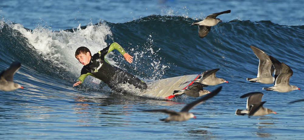 A young surfer wipes out as he surfs during a morning surf session at Newport Beach Municipal Beach.