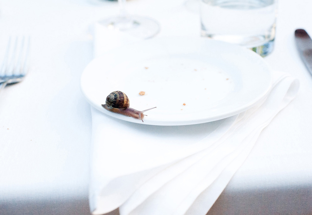 snail on the dinner plate from a wedding reception humorous documentary wedding photography