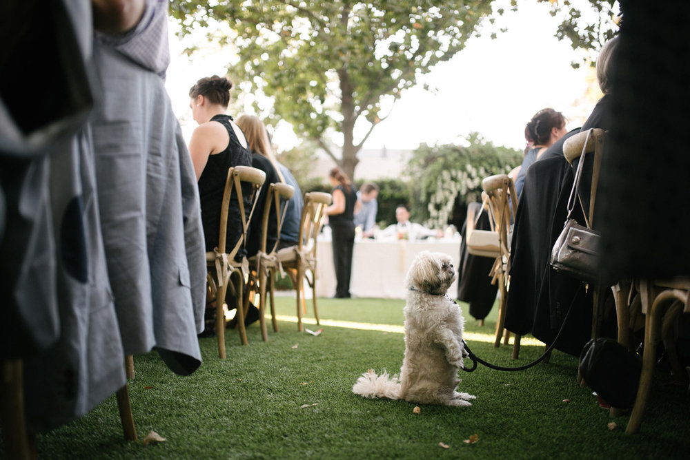 little white dog quietly begs for food during wedding dinner but is ignored humorous documentary wedding photography
