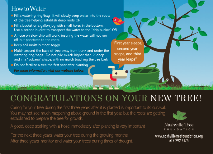 How to water your tree - Free download