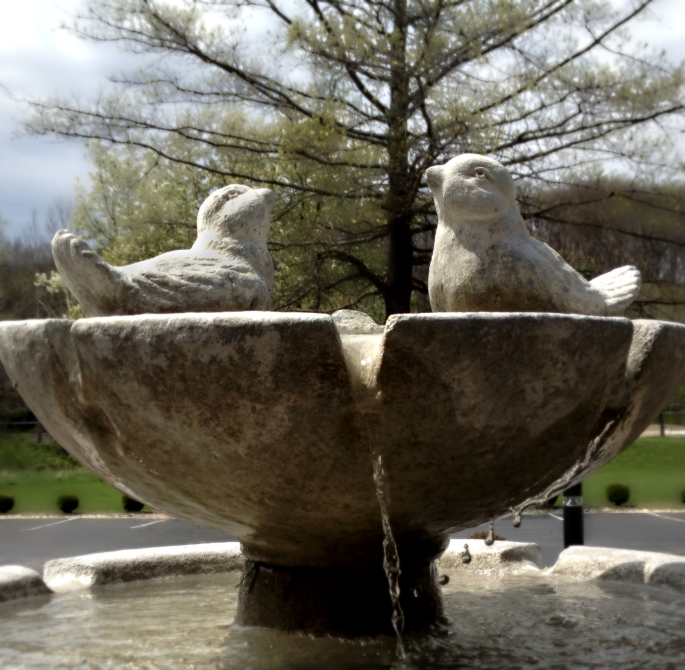 Birds on Memorial Fountain
