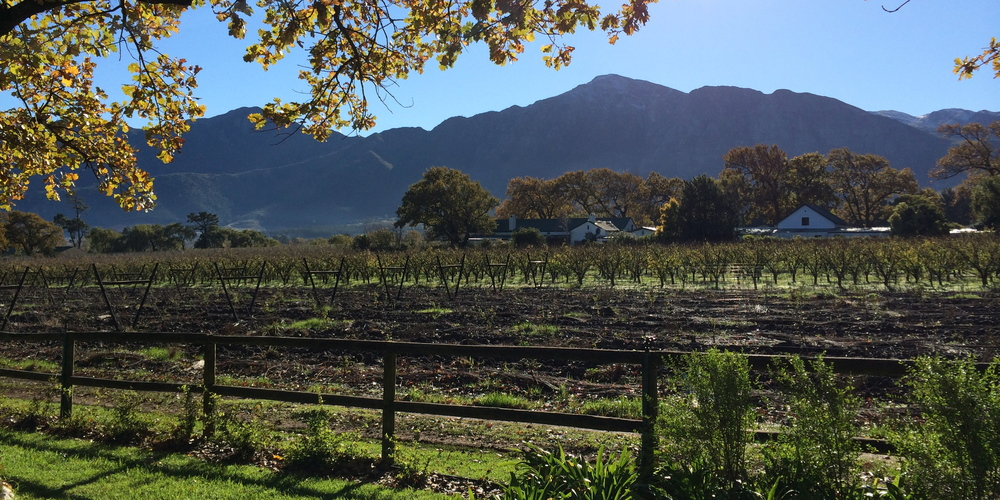 A view of a wine farm in Franschhoek, a small town north of Cape Town that Julie and I enjoy escaping to.