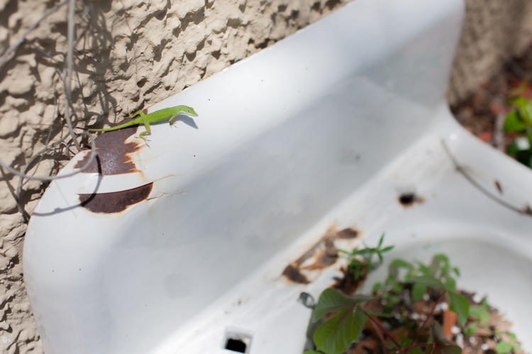 planter_016.jpg