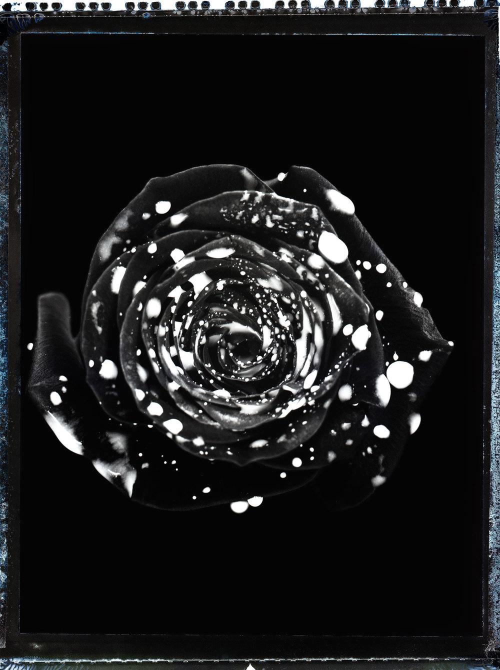 ROSE(Print).jpg
