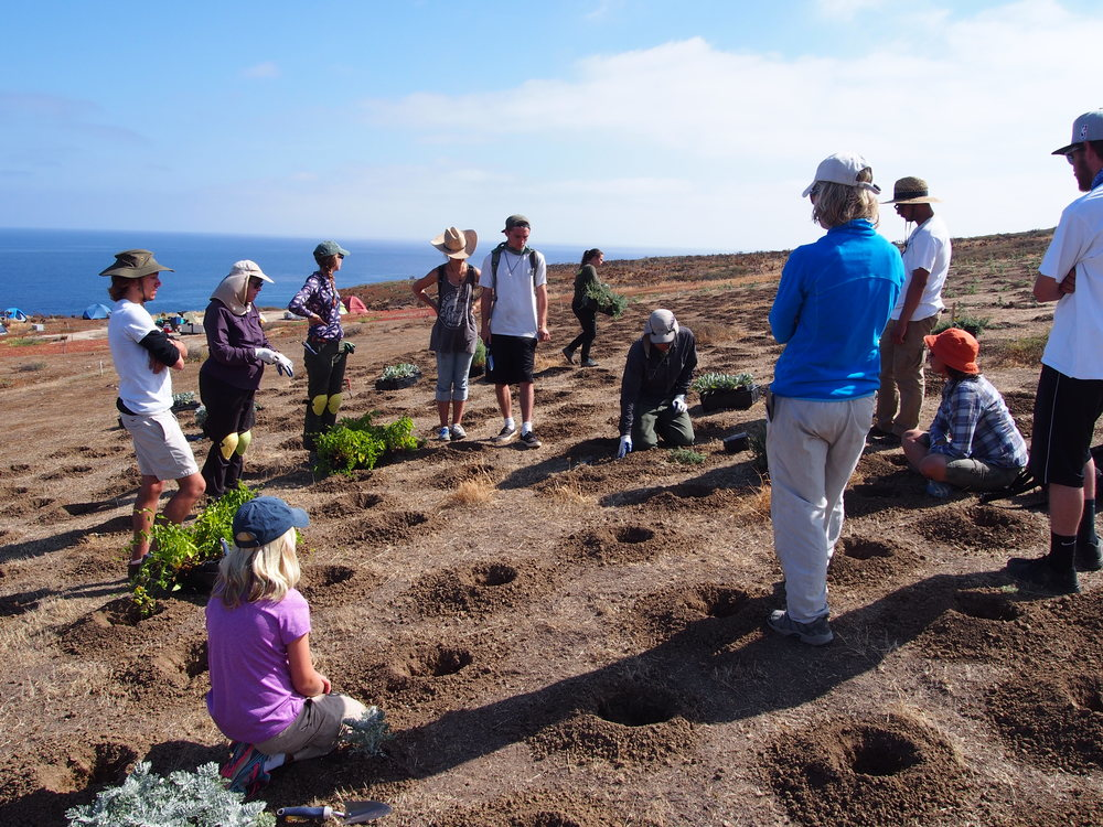 Horticulture students restore Santa Barbara Island habitats   see entire article at Santa Barbara City College Channels Newspaper