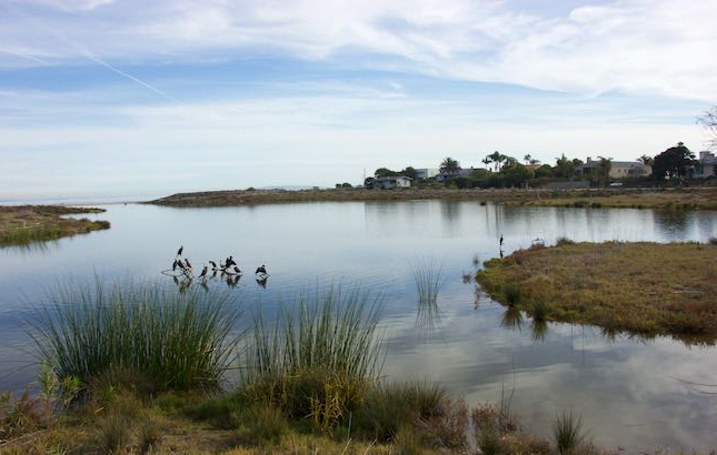 Malibu_Lagoon_State_Beach_7679-1 (dragged).jpg
