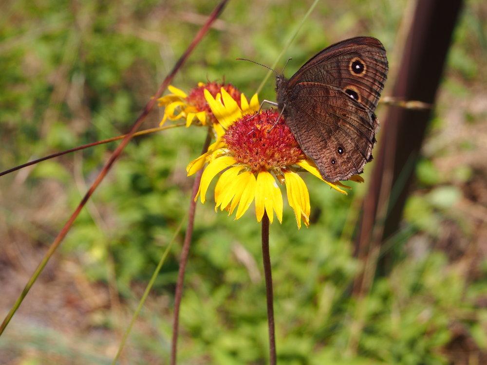 Pollinator paradise!