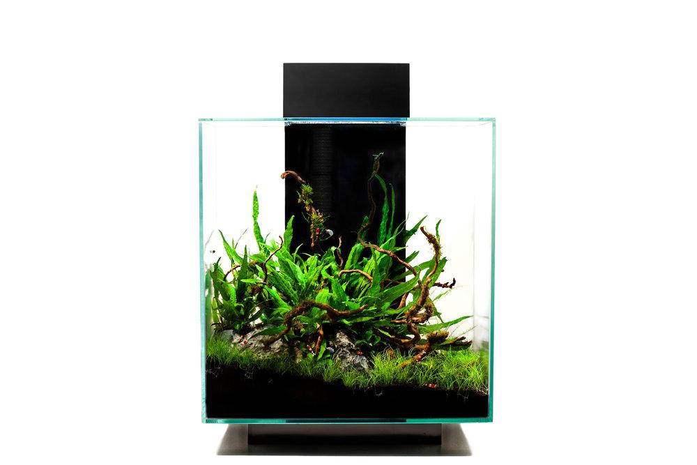 Livecube Aquarium