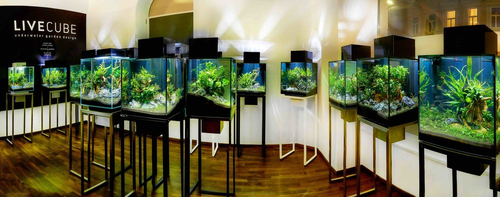 Livecube Galerie Seidlgasse 29, 1030 Wien